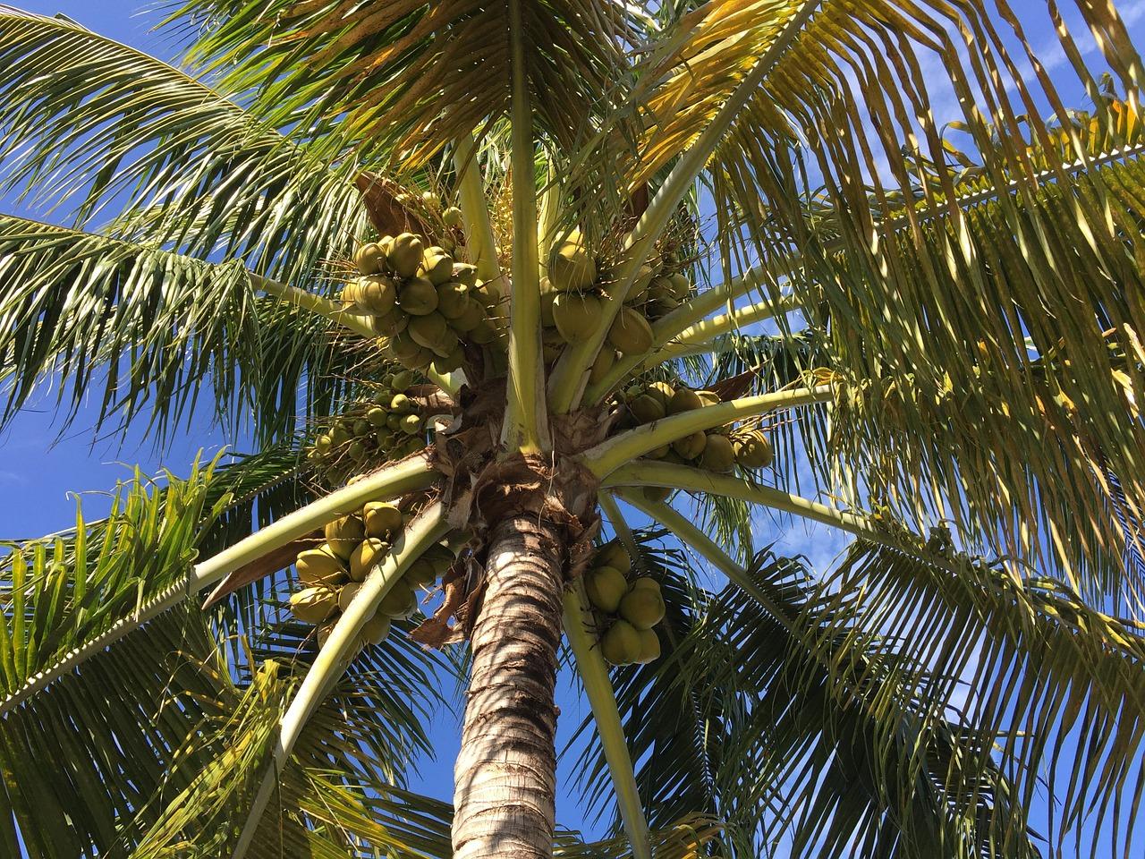 51 geniale Verwendungszwecke für Kokosnussöl